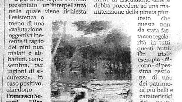 Pineta Marradi: Taglio dei pini, non ci accontentiamo di facili risposte….