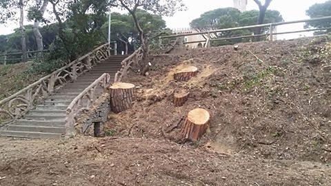 Tagli Pineta Marradi, il PD Rosignano ci risponde (si fa per dire) sul Tirreno….